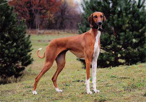 породы собак для квартиры зачем собаке вольер в квартире